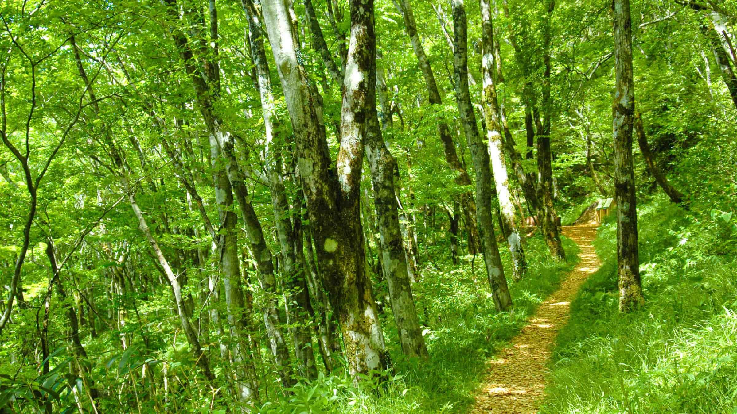 セラピーロードをのんびり散策。避暑地散歩で癒される。