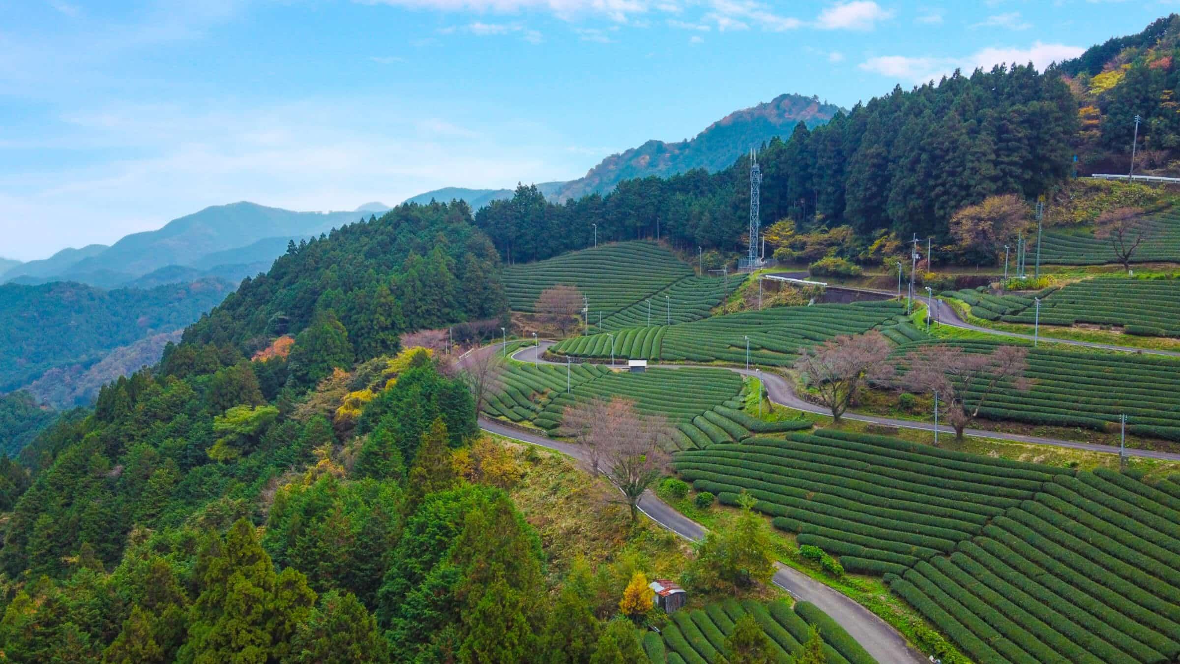旧道をのんびり楽しむ茶畑ツーリング。「道の駅 布施ヶ坂」で小休止