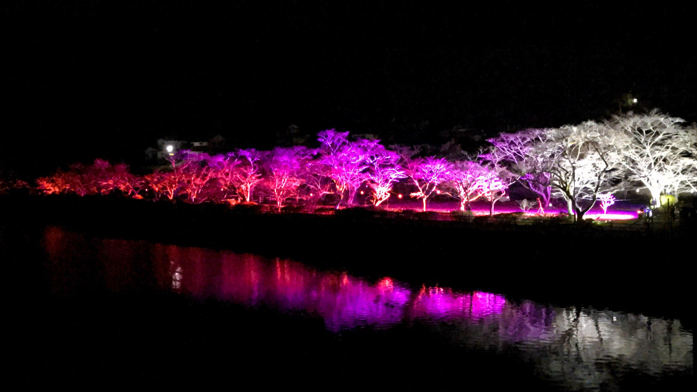 川沿いに咲き乱れる桜の名所。幻想的な夜桜も必見[家地川公園]