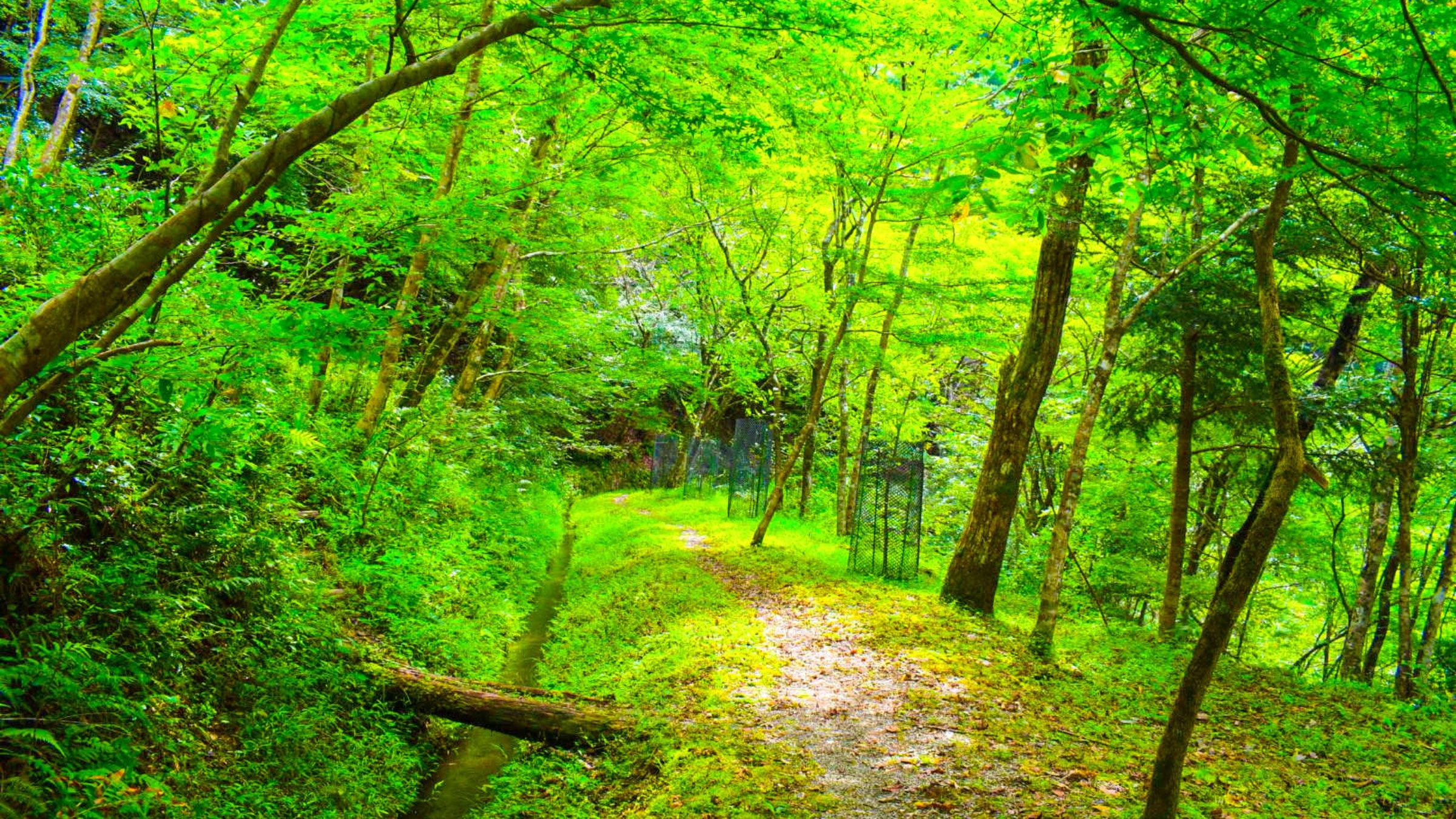 まるで童話の主人公。癒しの緑の遊歩道へ「久保谷セラピーロード」