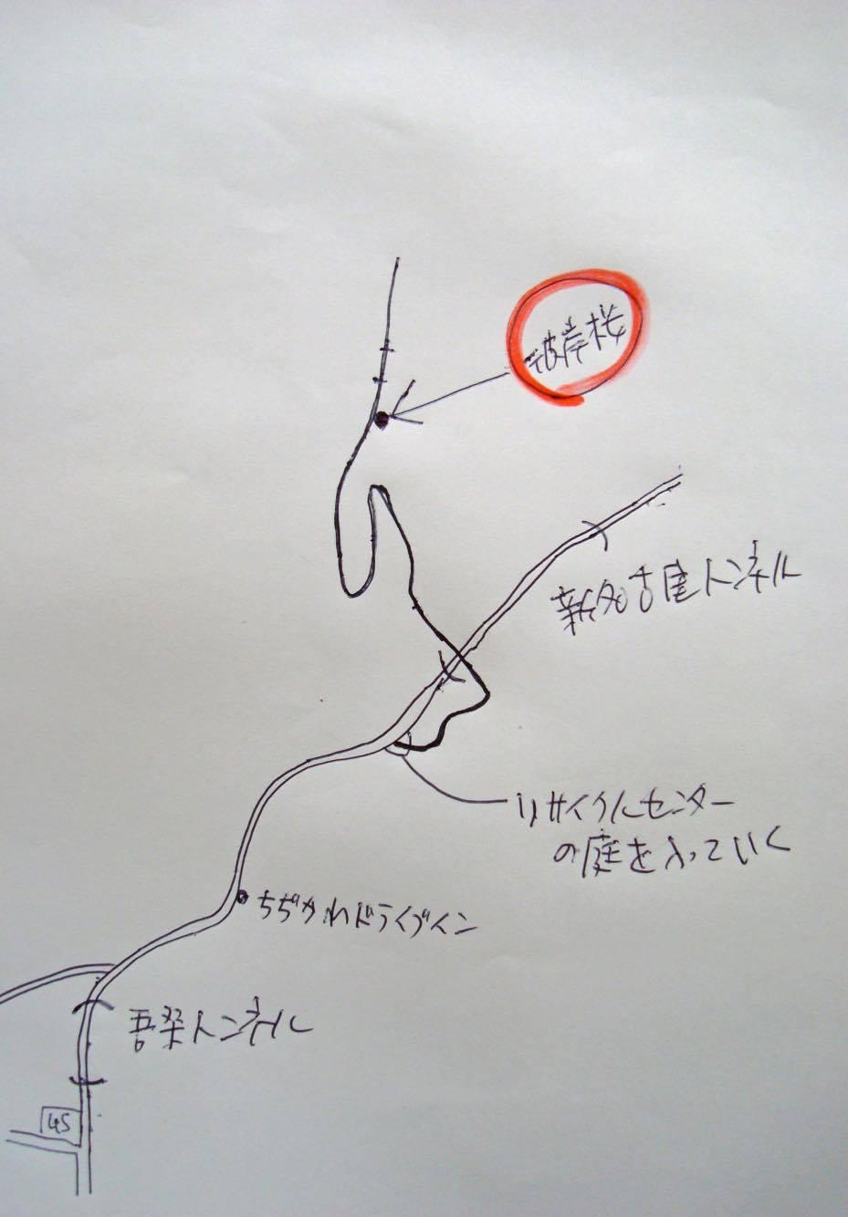 asou100sakura