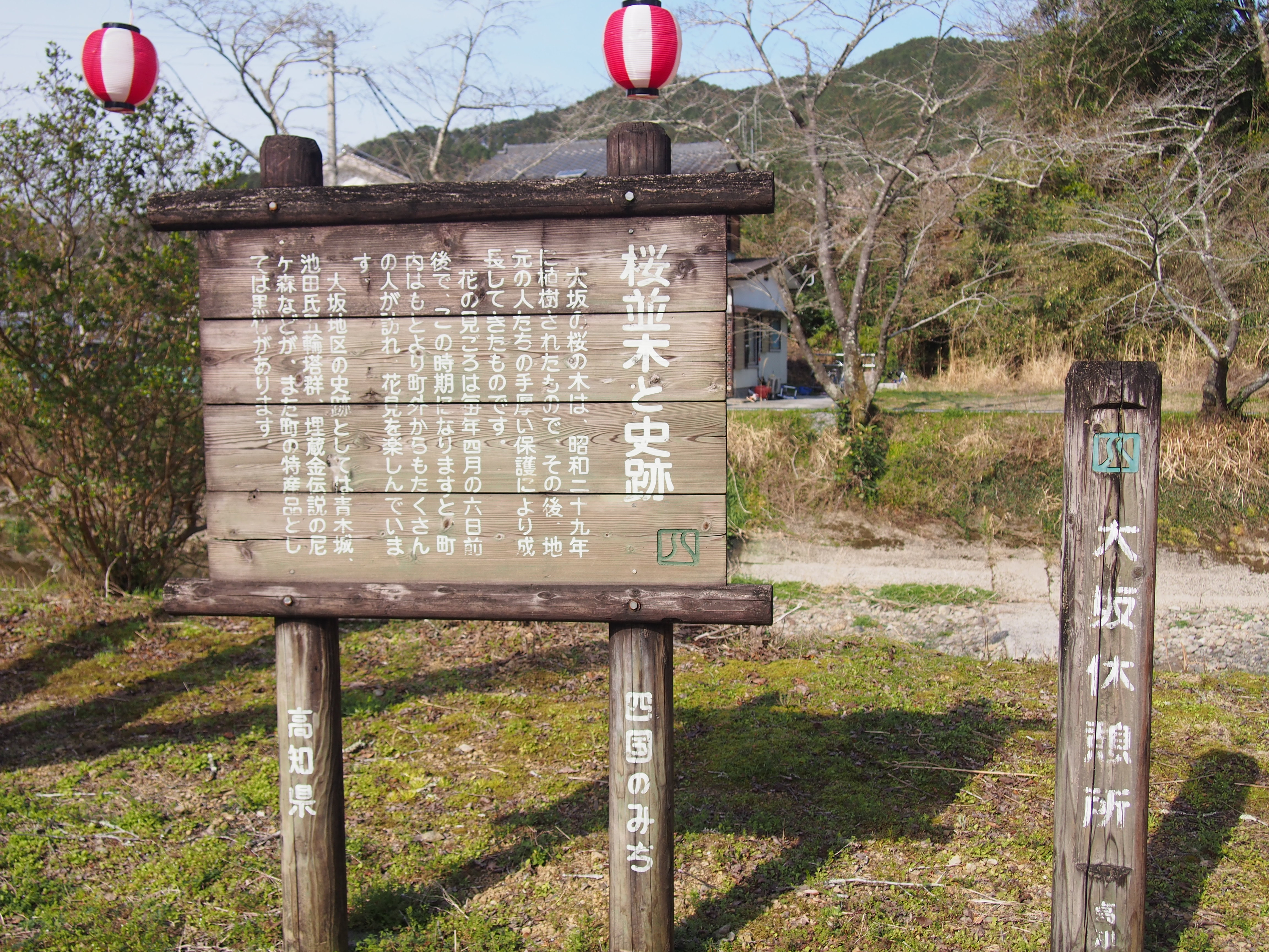 中土佐町 大阪谷川 桜