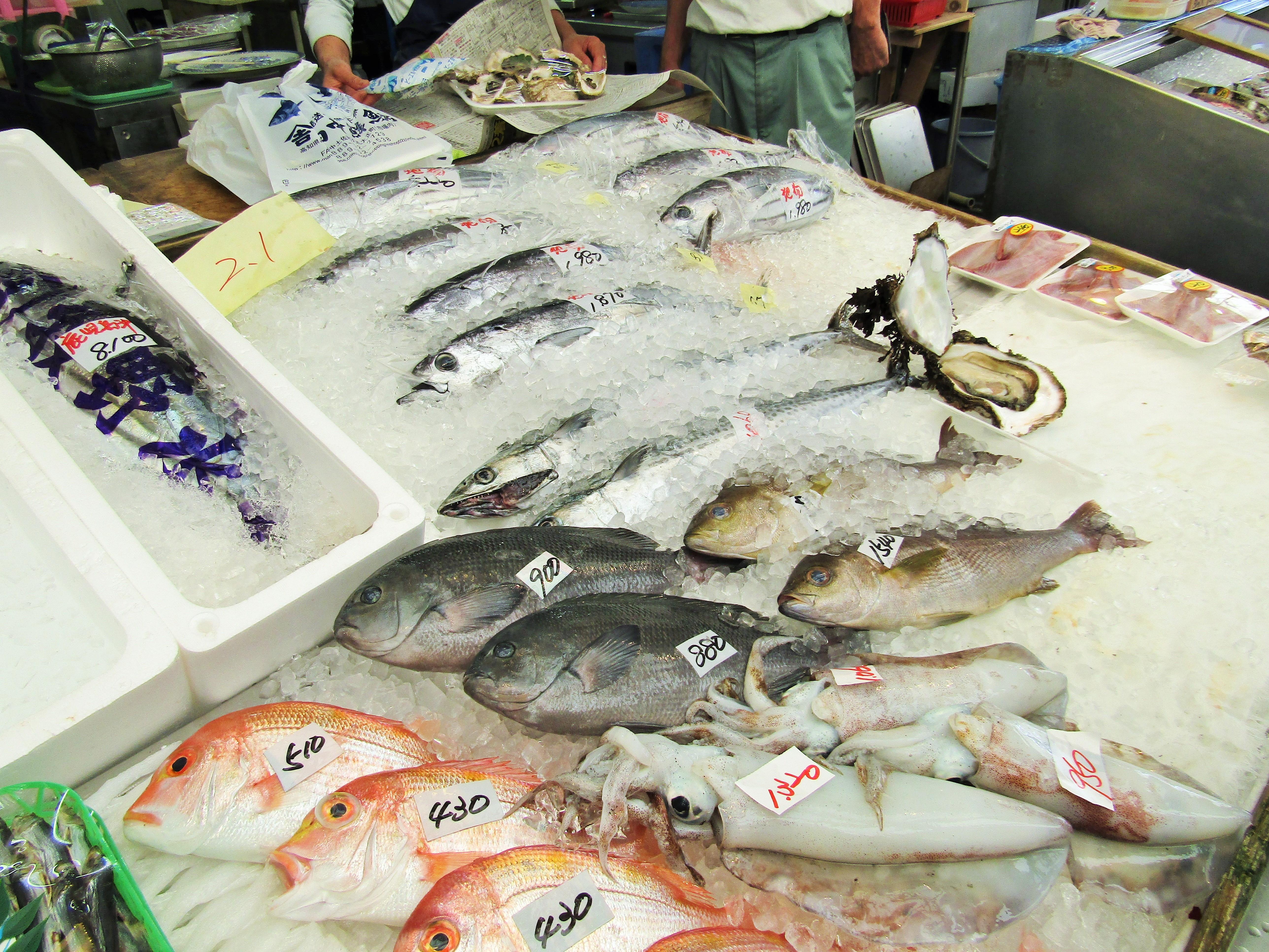 田中鮮魚店 魚