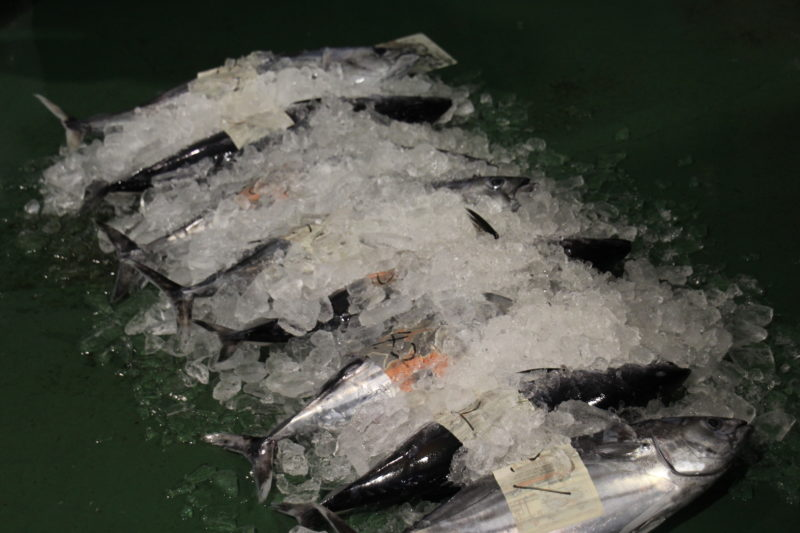 1月18日鰹1t揚がりました。久礼新港に「鰹のせり」行ってきました。