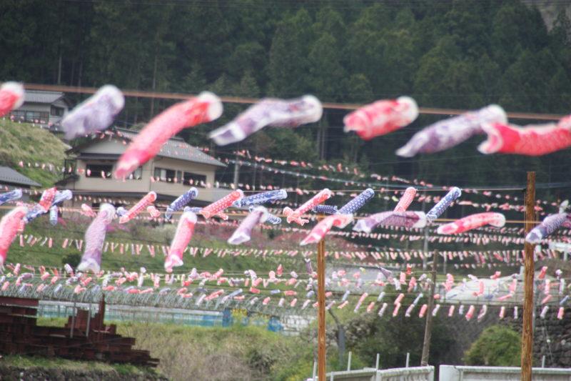 【梼原町】☆桜と鯉のぼりとゆすはら観光びらき☆