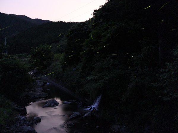 高知県 中土佐町 ホタル 竹原