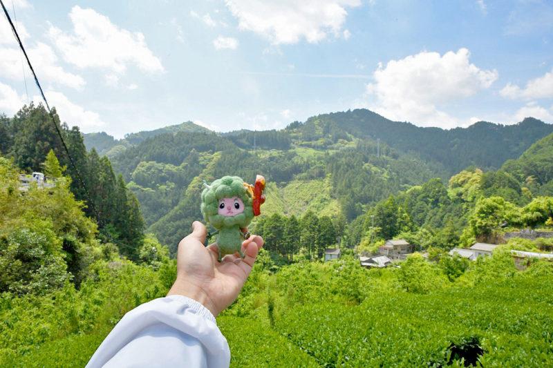 茶畑ウォーキングレポート&5月のツノトゥク定期周遊