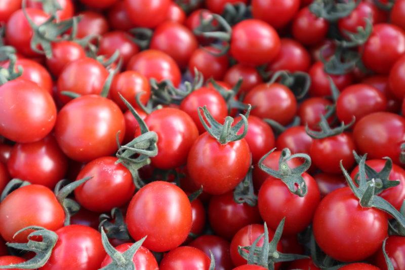 中土佐町久礼に、甘~いトマトの宇井農園できました。