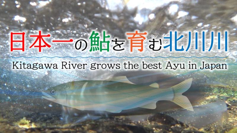 日本一の鮎を育む北川川【動画】