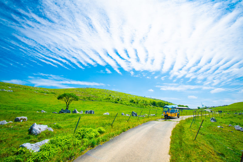 ツノトゥク周遊再開!6月は「四国カルスト天狗高原」を周遊します。
