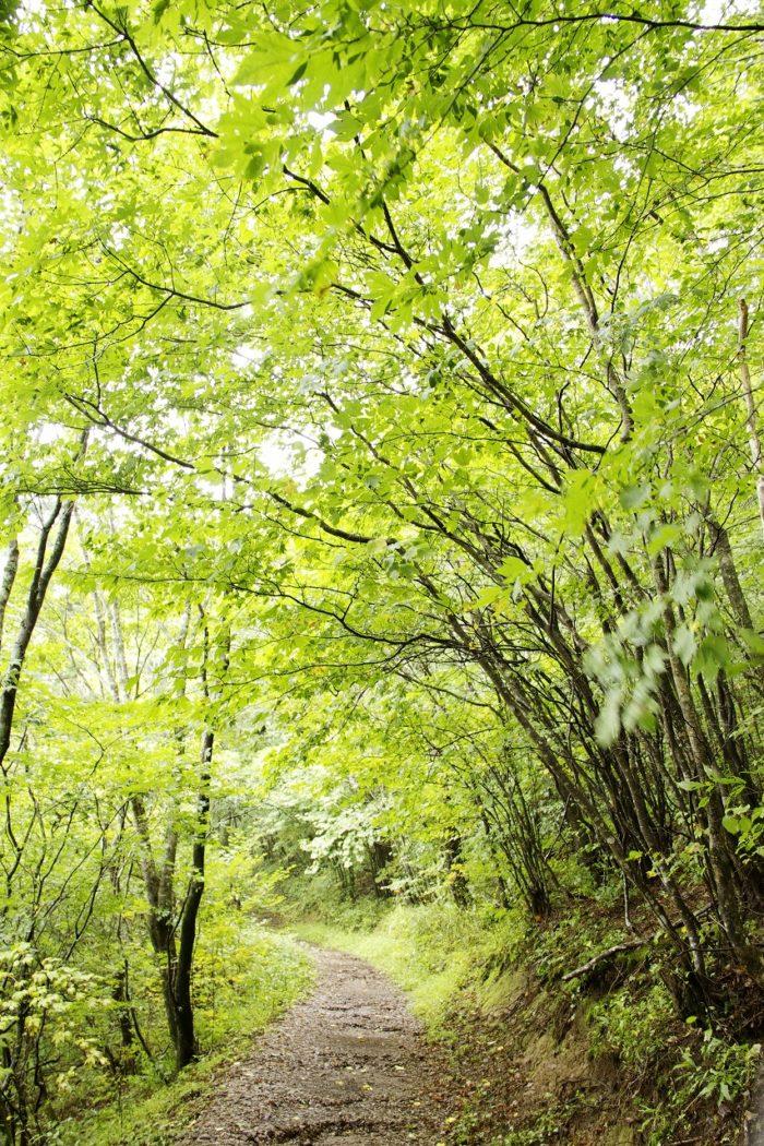 天狗高原森林セラピーガイド