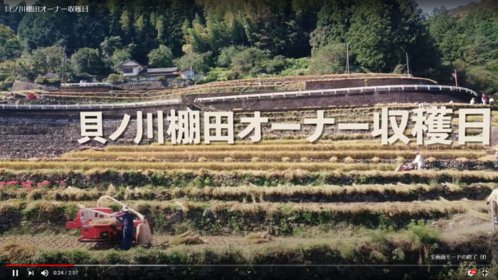 貝ノ川の棚田オーナー収穫日の様子