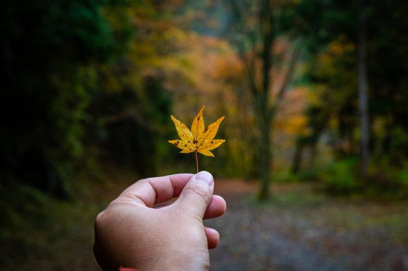 落ち葉を踏み締めて歩く不入渓谷が癒やされる